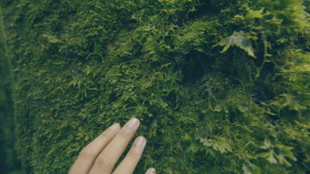 vídeos de stock e filmes b-roll de woman hand touching a moss softly in a rainforest - suavidade
