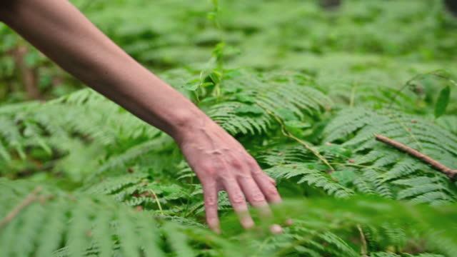 Woman hand touching fern green leaves foliage. High quality 4k footage