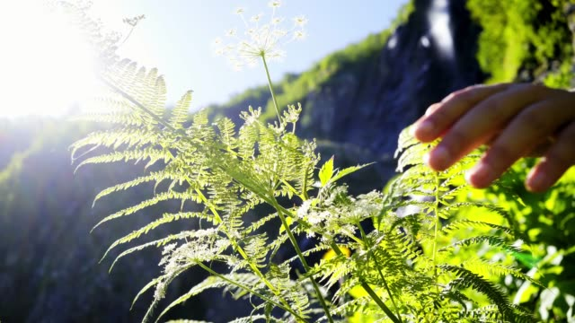 Woman hand touching fern leaf in sunlights