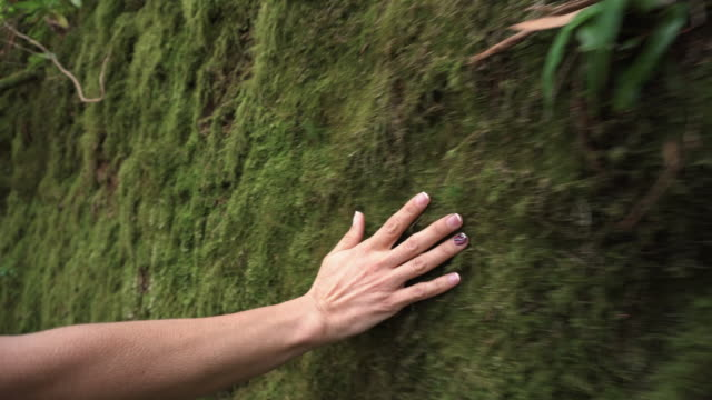 woman hand touching softly the moss on the wall in the tropical rainforest. - sustainability video stock e b–roll