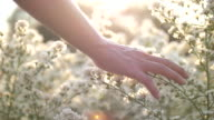 istock Woman Hand Touching The Flowers with Sunset 1198286794