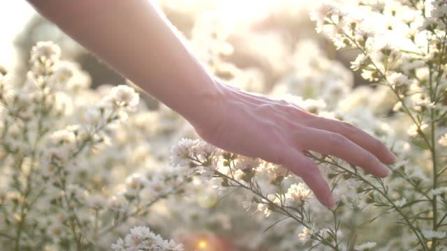 vídeos de stock e filmes b-roll de woman hand touching the flowers with sunset - natureza close up