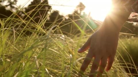 frau hand berühren den rasen mit sonnenstrahl - gras stock-videos und b-roll-filmmaterial