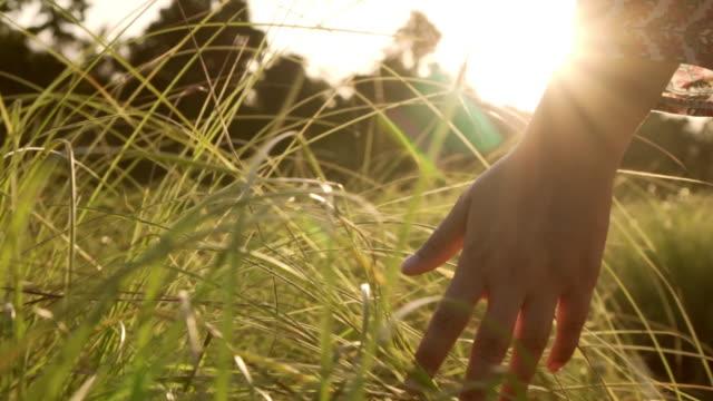 vídeos de stock, filmes e b-roll de mão de mulher tocando a grama com raio de sol - grama
