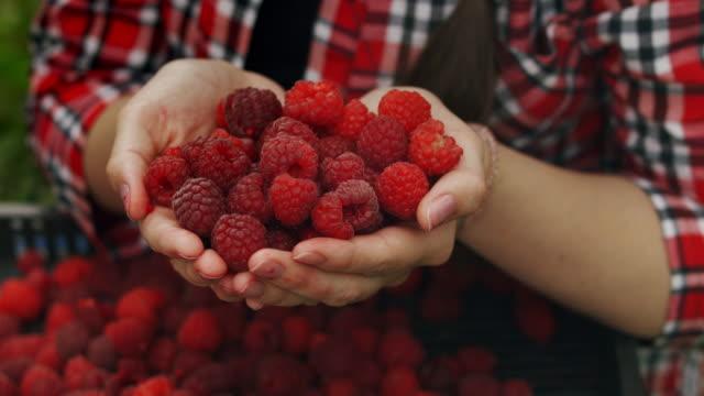 Woman hands hold fresh organic raspberries