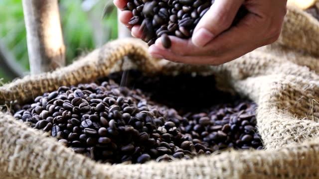 женщина руки, держа кофе и зерна - кофеин стоковые видео и кадры b-roll