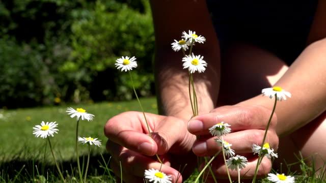 woman hands pick small daisy flowers from lawn. fullhd - нивяник стоковые видео и кадры b-roll