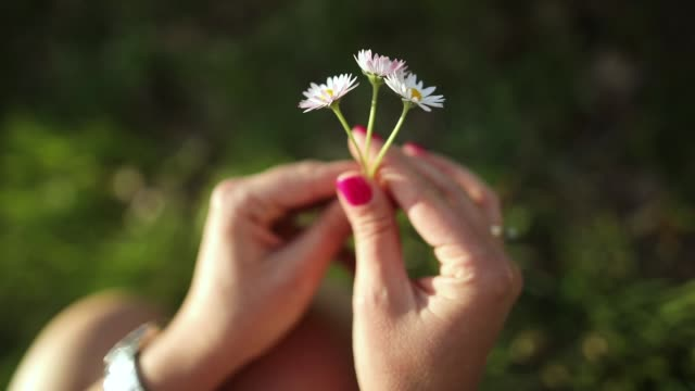 Woman hands playing with daisy flowers