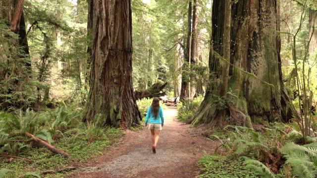 frau wanderer erforscht alten waldbestands redwood national park in kalifornien - staatspark stock-videos und b-roll-filmmaterial