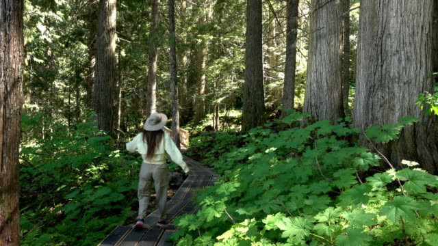 Woman hikes old-growth red cedar Ancient Forest Provincial Park Prince George British Columbia video