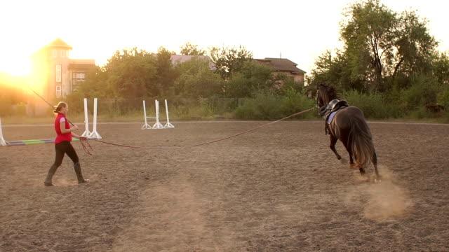女性は、サークルでの中綱に馬を保持します。 - 動物に乗る点の映像素材/bロール