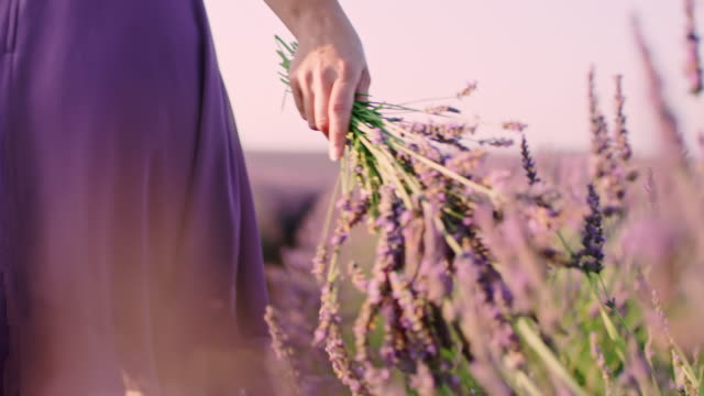 MS Woman holding a bouquet of lavenders