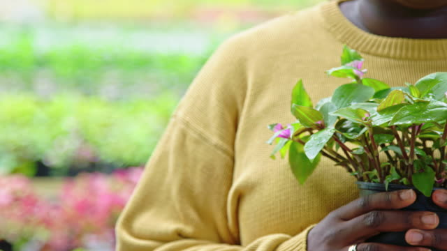 Woman holding a potted plant in greenhouse Close-up shot of a woman holding a potted plant in greenhouse. Gardener working in plant nursery. agricultural occupation stock videos & royalty-free footage