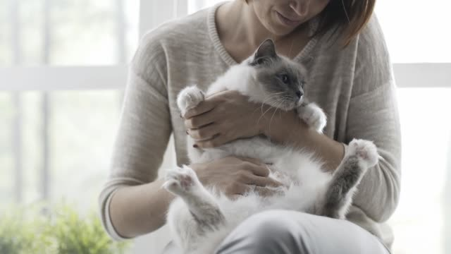 vidéos et rushes de femme tenant et caresser son joli chat à côté d'une fenêtre - femme seule s'enlacer