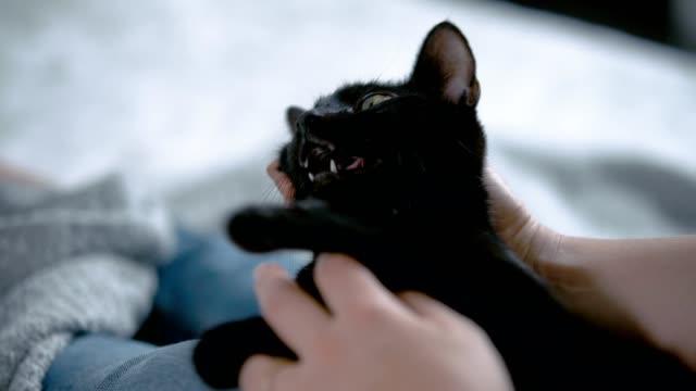 Woman holding black cat on her lap. Close up