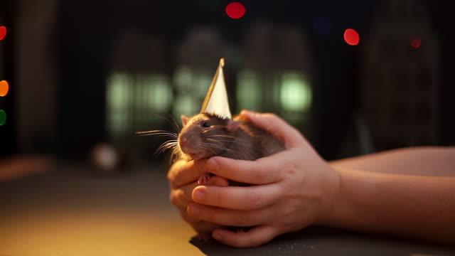 şenlikli arka planda altın şapkalı yerli gri fareyi kollarında tutan kadın. - kemirgen stok videoları ve detay görüntü çekimi