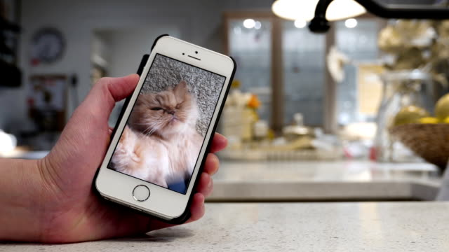 Woman holding phone and watching persian cat movie with blurry dining room – Video