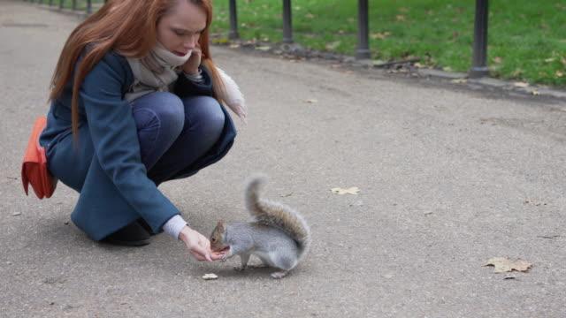 bir kadın parkta bazı sincapbeslemek için elini uzatır - kemirgen stok videoları ve detay görüntü çekimi