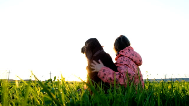 Woman hugging a dog at sunset, a young girl with a pet sitting on the grass and relaxing in nature Woman hugging a dog at sunset, a young girl with a pet sitting on the grass and relaxing in nature. irish setter stock videos & royalty-free footage