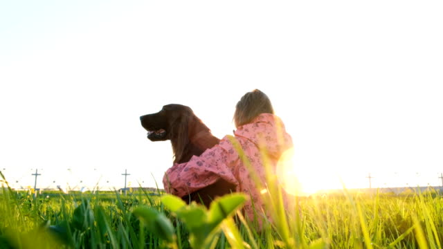 Woman hugging the dog at sunset while sitting on the grass Woman hugging the dog at sunset while sitting on the grass. irish setter stock videos & royalty-free footage