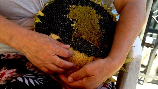 Woman hulling sunflower seeds