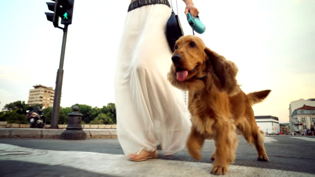 Woman in a walk with her puppy Unrecognizable woman leads the dog to the leash. leash stock videos & royalty-free footage
