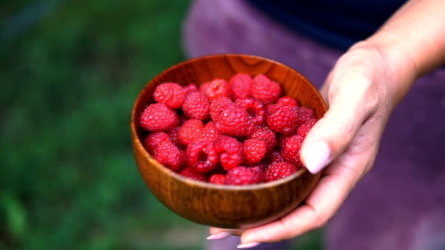 A woman in blue clothes harvesting a ripe red raspberry from the bushes in the garden or on the farm A woman in blue clothes harvesting a ripe red raspberry from the bushes in the garden or on the farm handful stock videos & royalty-free footage
