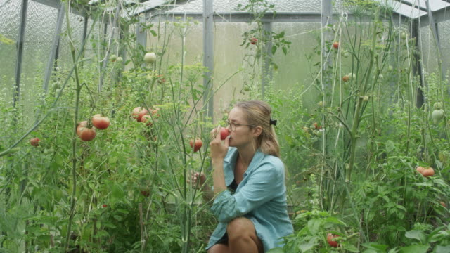 Woman in greenhouse. Checking tomatoes Young woman walking into greenhouse. Looking at plants homegrown produce stock videos & royalty-free footage