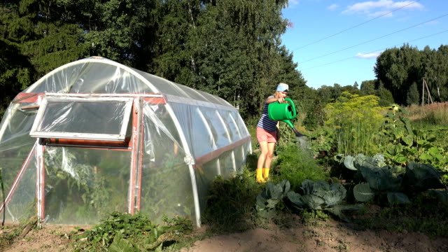 woman in shorts and gumboots watering carrot plants near greenhouse at vegetables garden. 4K