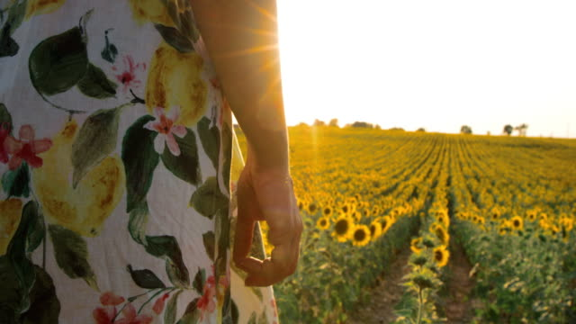 MS Woman in the field of sunflowers