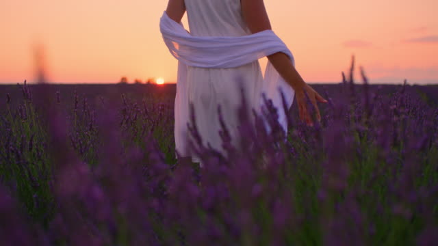 LA Woman in white dress in a field of lavender at dusk Low angle shot of an unrecognizable woman in white sundress caressing lavender plants with her hand while walking through a field at dusk. Plateau De Valensole. Provence-Alpes-Cote d'Azur. France. Shoot in 8K resolution. beauty in nature stock videos & royalty-free footage