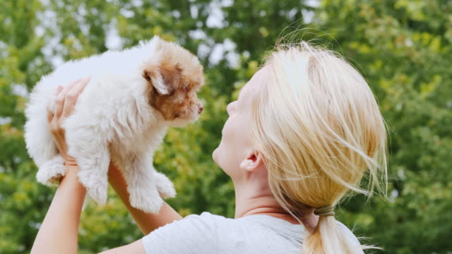 A woman is holding a brown puppy in her hands, looking at him. Lovely pet. Back view video