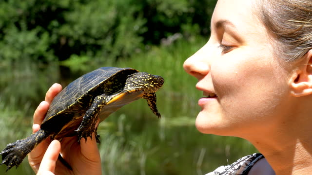 Woman is Holding a Small River Turtle in her Hands near Face on Nature and River Background Woman is Holding a Small River Turtle in her Hands near Face on Nature and River Background. Close-up. Summer, sunny day. leaf vein stock videos & royalty-free footage