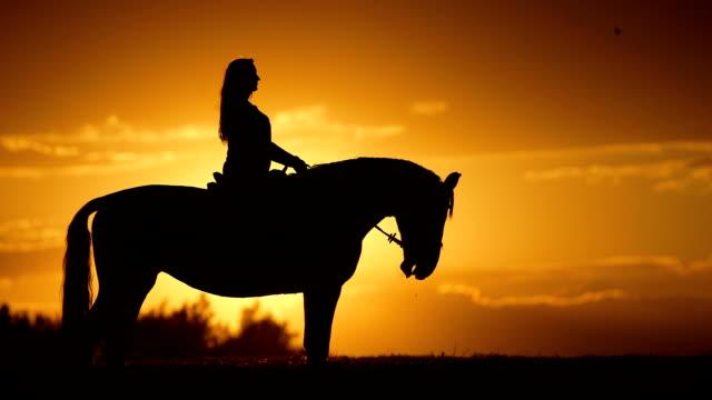 Femme est à cheval à l'horizon au coucher de soleil - Vidéo