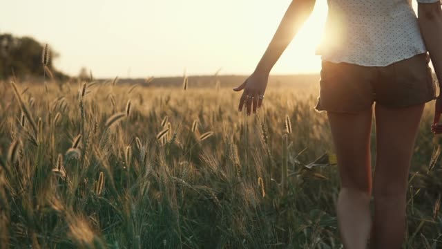 Woman is touching ears of rye in field in sunset time, close-up back view