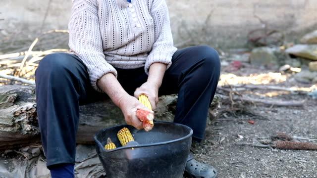 A woman kneels corn video