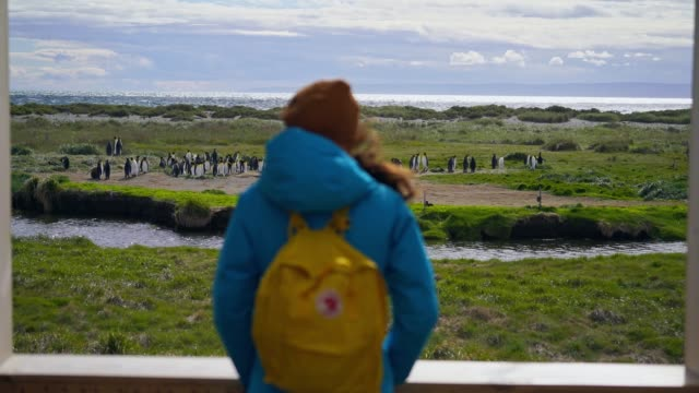 woman looking at king penguins on tierra del fuego - antarctica travel stock videos & royalty-free footage