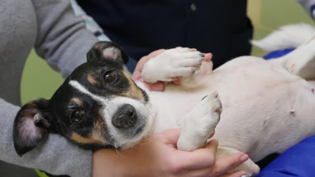 女性は犬 veterinal 超音波のクリニック ビデオ