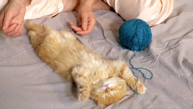 woman near sleeping kitten - viziarsi video stock e b–roll