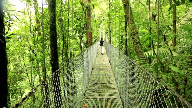Woman on hanging bridge, Costa Rica Woman walking on hanging bridge at natural rainforest park, Costa Rica suspension bridge stock videos & royalty-free footage