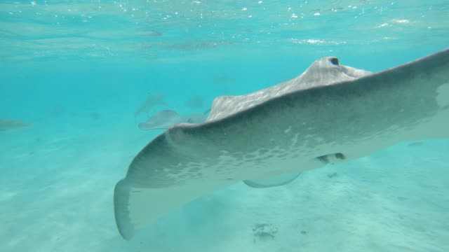 vídeos de stock e filmes b-roll de underwater: woman on holiday dives in emerald ocean past fish and stingrays. - uge