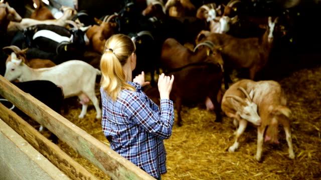 donna proprietaria di allevamento di capre da latte - lattaio video stock e b–roll