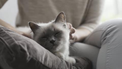 vídeos y material grabado en eventos de stock de mujer acariciando a su gato acostado sobre un cojín suave - mascota