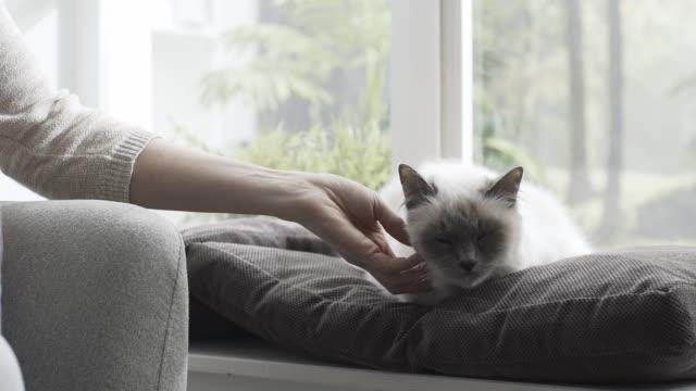 woman petting her cat lying on the windowsill - davanzale video stock e b–roll
