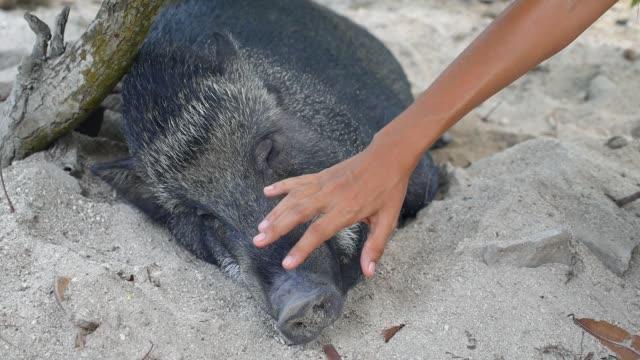 女はケアと愛で豚をかわいがる - 子豚点の映像素材/bロール