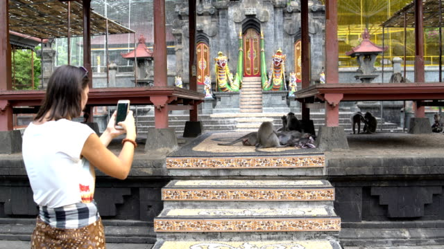 A woman photographs on a smartphone monkey on the territory of a Buddhist temple video