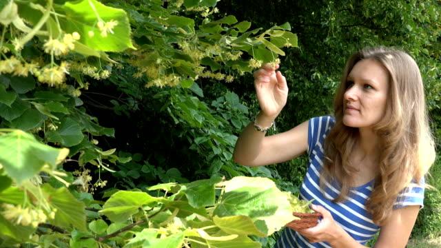 stockvideo's en b-roll-footage met vrouw pick linden kruiden bloemen aan houten rieten dish - camelia white