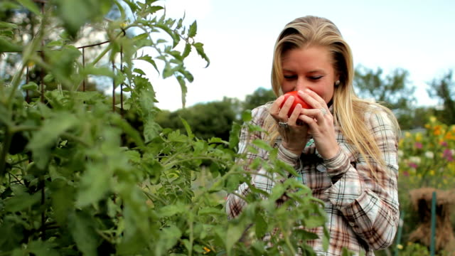 Woman picking a tomato from the garden video