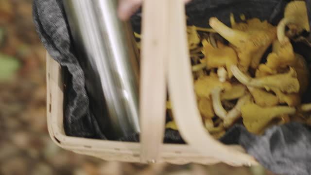 kvinna plocka svamp och dricka kaffe i skogen - höst plocka svamp bildbanksvideor och videomaterial från bakom kulisserna