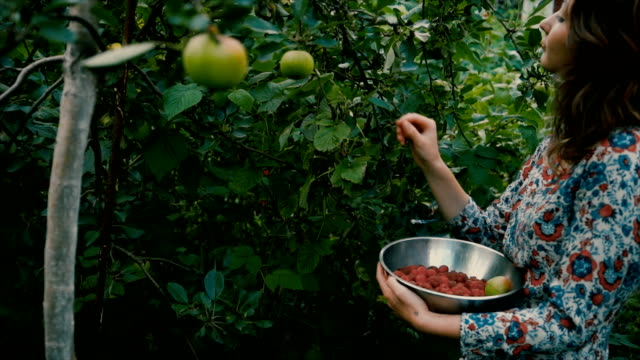 woman picking raspberry in the countryside - bacca video stock e b–roll